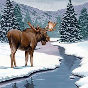 Moose Facts Information And Photos American Expedition