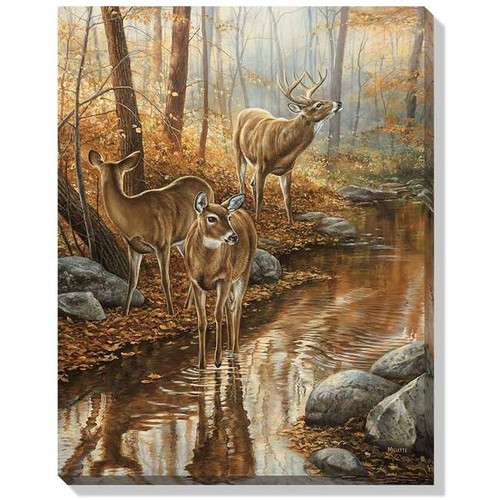 Whitetail Deer Water Passage Wrapped Canvas Art