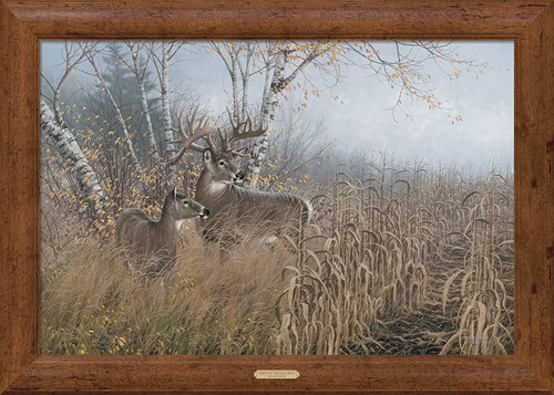Corn Fed Trophy Buck Framed Print