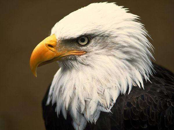 bald-eagle-head-everglades-national-park.jpg