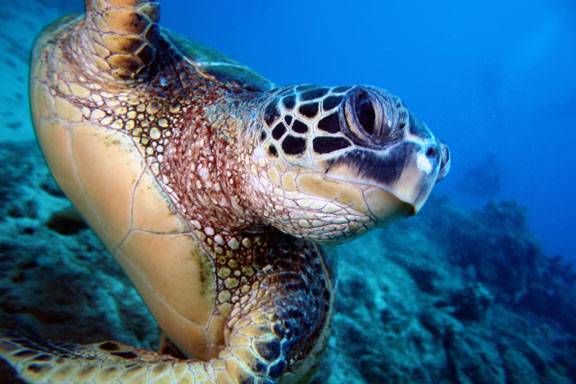 green-sea-turtle-close-up.jpg