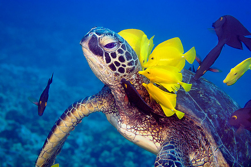 green-sea-turtle-everglades-cleaning.jpg