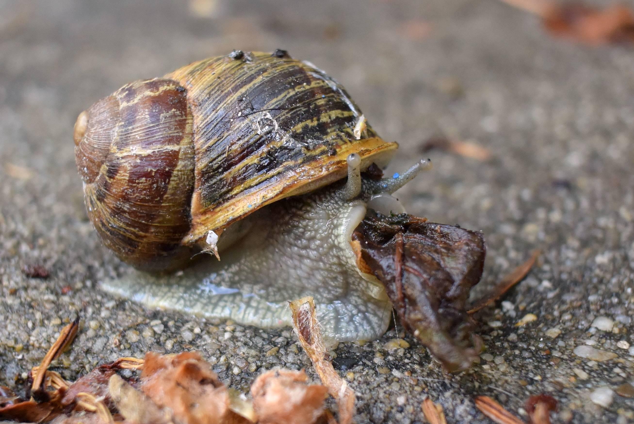 stock-island-tree-snail.jpg