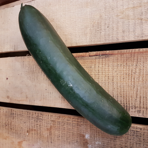 Certified Organic Field Cucumber (1pc. average 200g)