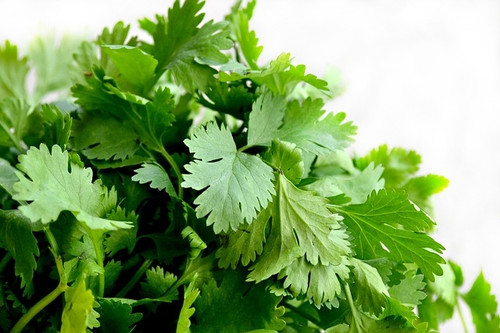 Certified Organic Cilantro Bunch