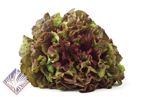 Certified Organic Red Leaf Lettuce (Each)