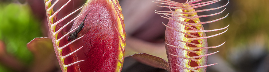 online sale of carnivorous plants california