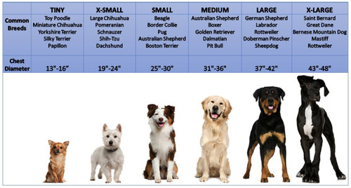 Boxer Dog Size Chart Ibovnathandedecker