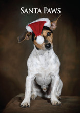 Jack Russell Terrier Santa Paws Christmas Card