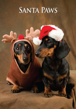 Miniature Dachshund Pair Santa Paws Greeting Card