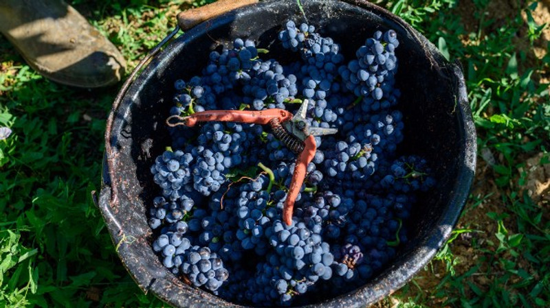 Burgundy En Primeur 2016