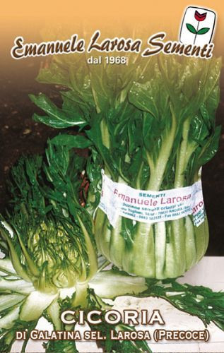 Chicory Galatina (precoce) - Asparagus Chicory (40-99)