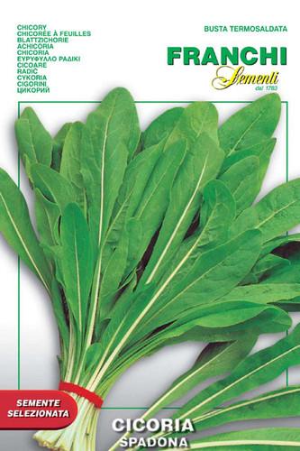 Chicory Spadona (40-1)