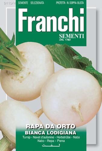 Turnip Bianca Lodigiana (110-4)