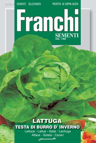 Lettuce Testa di Burro D'Inverno (79-8)