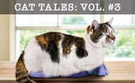 Cat Tales Vol. III