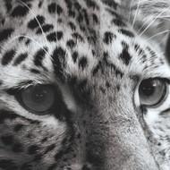 Protect Partner Profile: Panthera