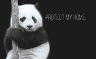 Protect Partner Profile: Pandas International