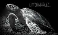 Protect Partner Profile: The Sea Turtle Conservancy