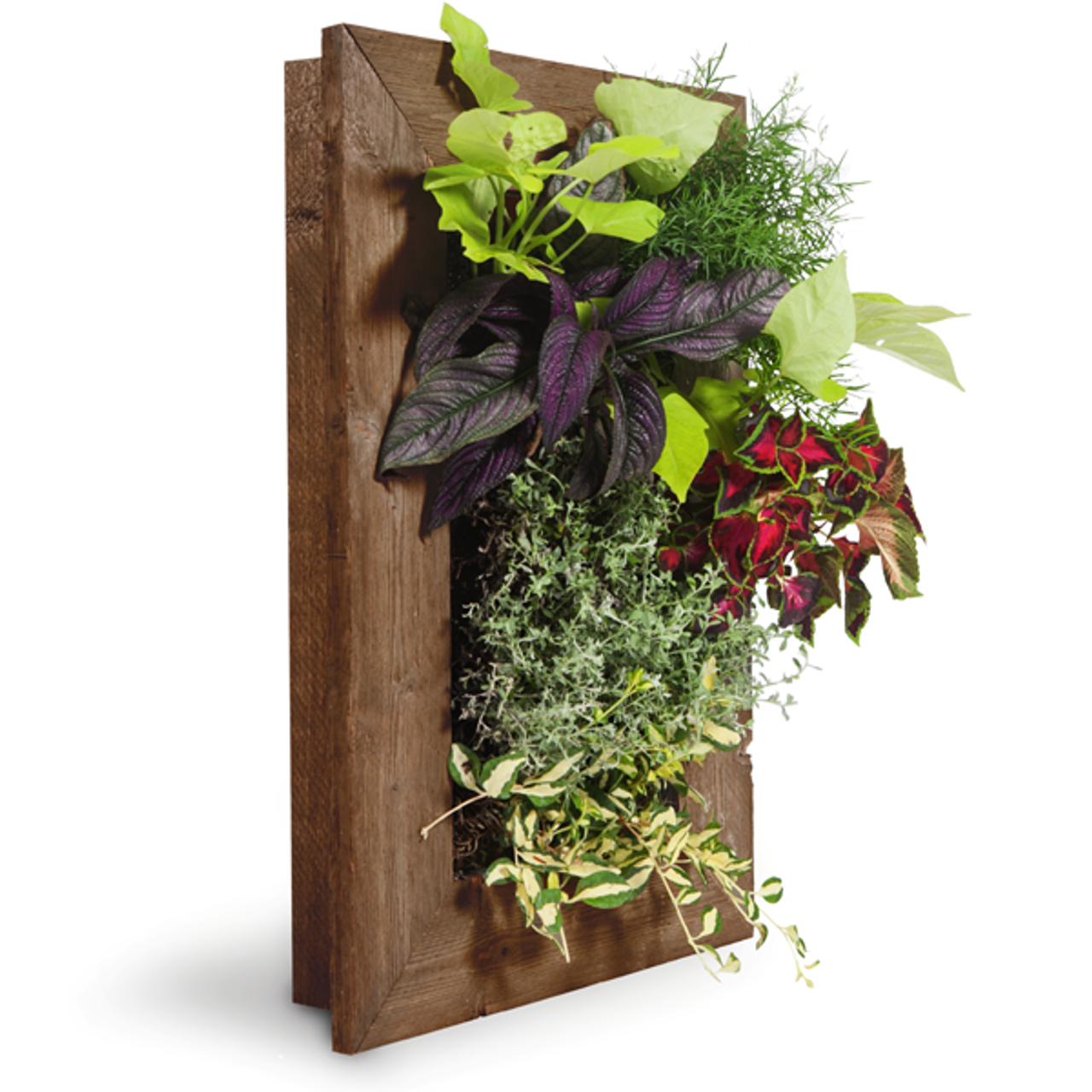Grovert Wall Planter Ghostwood Frame Kit