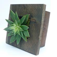 Mini Grovert Wall Planter - Gray