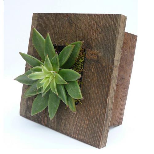 Mini Grovert Wall Planter - Brown