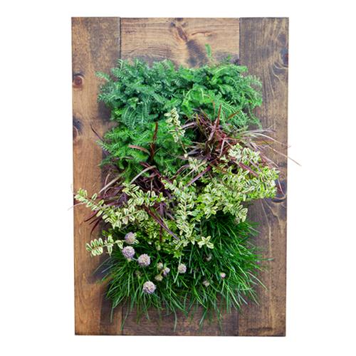 Grovert living wall planter walnut frame kit for Living wall planter