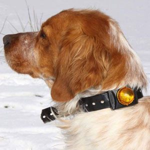 Adventure Dog Light
