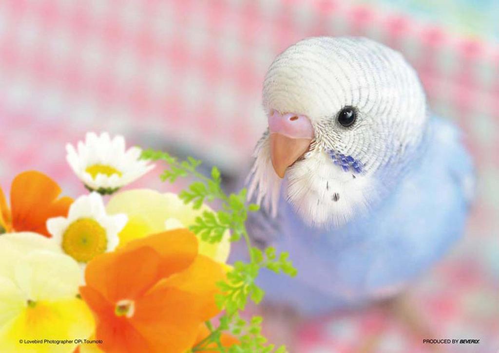 Beverly Jigsaw Puzzle P88-018 Pet I LOVE Parakeets (88 L-Pieces)