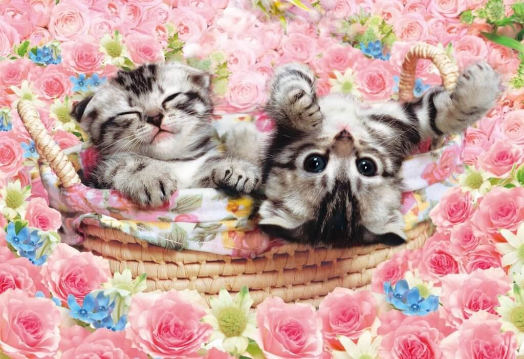 Epoch Jigsaw Puzzle 25-142 Kitty Cats with Beautiful Roses (300 Pieces)