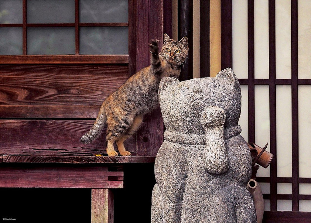 Epoch Jigsaw Puzzle 06-083 Mitsuaki Iwago Cat in Kyoto Japan (500 Pieces)