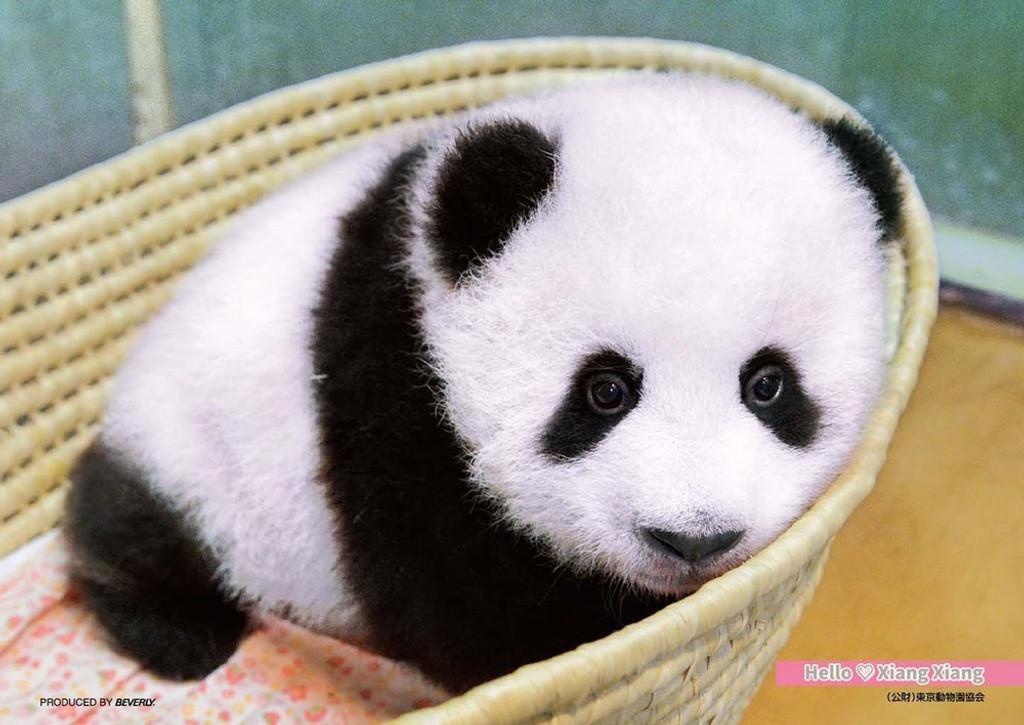 Beverly Jigsaw Puzzle P88-031 Hello Panda Xiang Xiang (88 L-Pieces)