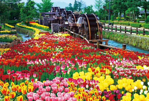 Beverly Jigsaw Puzzle 51-198 Japanese Scenery Tonami Tulip Park (1000 Pieces)