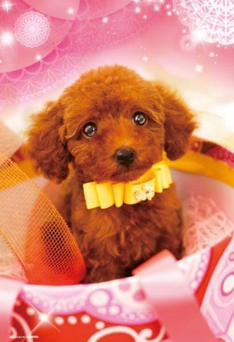 Beverly Jigsaw Puzzle P33-084 PRETTY PET Poodle (300 Pieces)