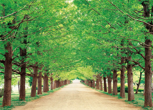 Epoch Jigsaw Puzzle 05-107 Green Path Tokyo Japan (500 Pieces)