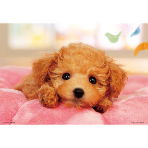 Beverly Jigsaw Puzzle L74-163 Pretty Pet Series Toy Poodle (150 L-Pieces)