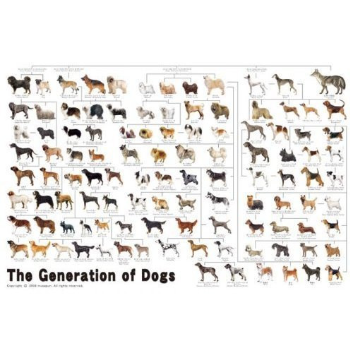 Epoch Jigsaw Puzzle 11-372 The Generation of Dogs (1000 Pieces)