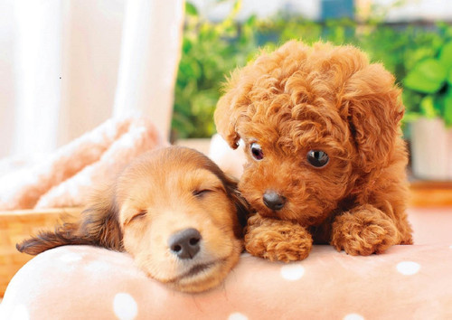 Epoch Jigsaw Puzzle 01-064 Pet Dog Poodle & Dachshund Nap Time (108 Pieces)