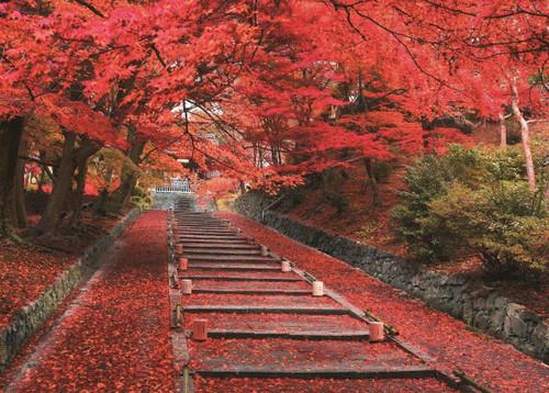 Epoch Jigsaw Puzzle 05-114 Autumn Leaves Bishamondo Temple Kyoto Japan (500 Pieces)