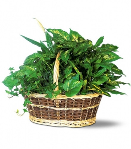 Medium Basket Dish Garden