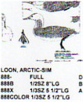Arctic/Pacific Loon Resting On Water