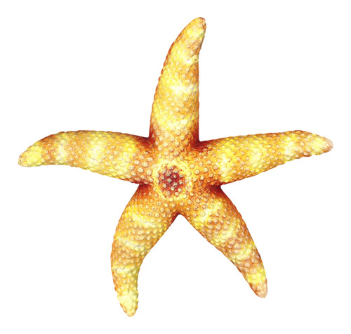 Sea Star Tan Starfish Wall Decor 9 Inch Resin Plaque - Mary B ...