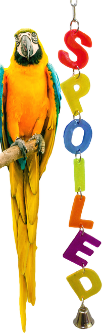 55047 Spoiled. Colorful cut out acrylic letters, spells out, just what your large feathered friend is.