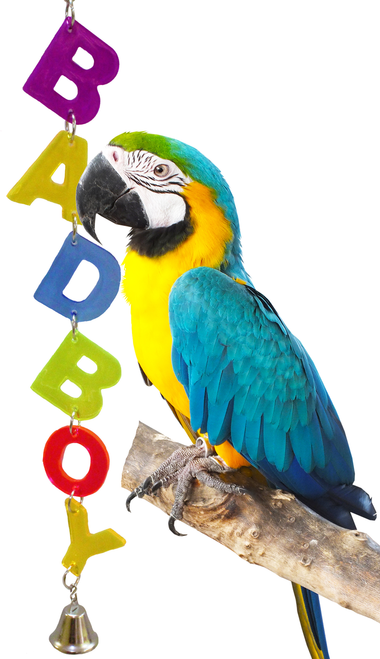 55054 Badboy. Colorful cut out acrylic letters, spells out, just what your large feathered friend is. Double letters,