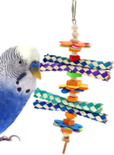 What is a good foraging toy for a small bird?