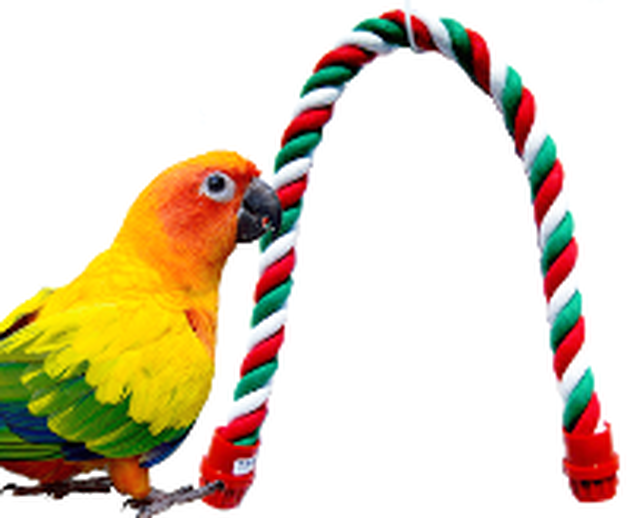What is a bird rope perch?