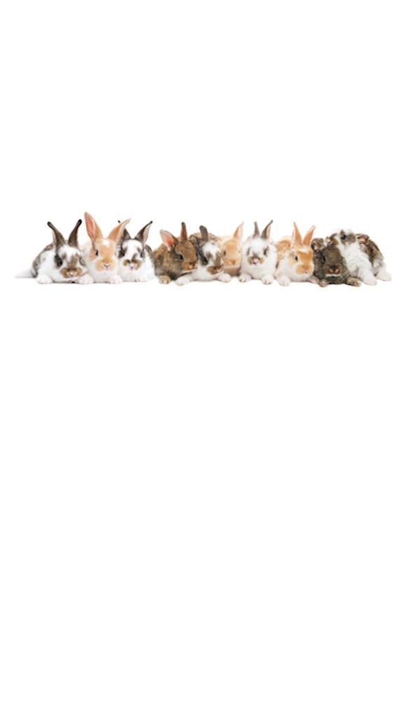 Bunnies Galore Backdrop
