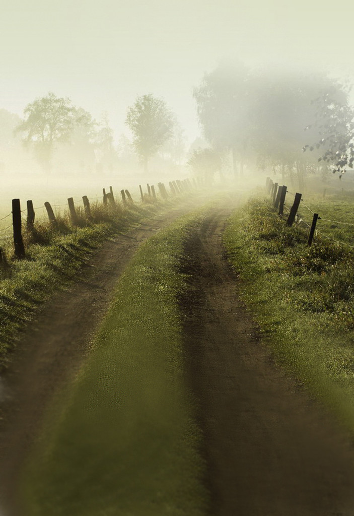 Foggy Road Backdrop