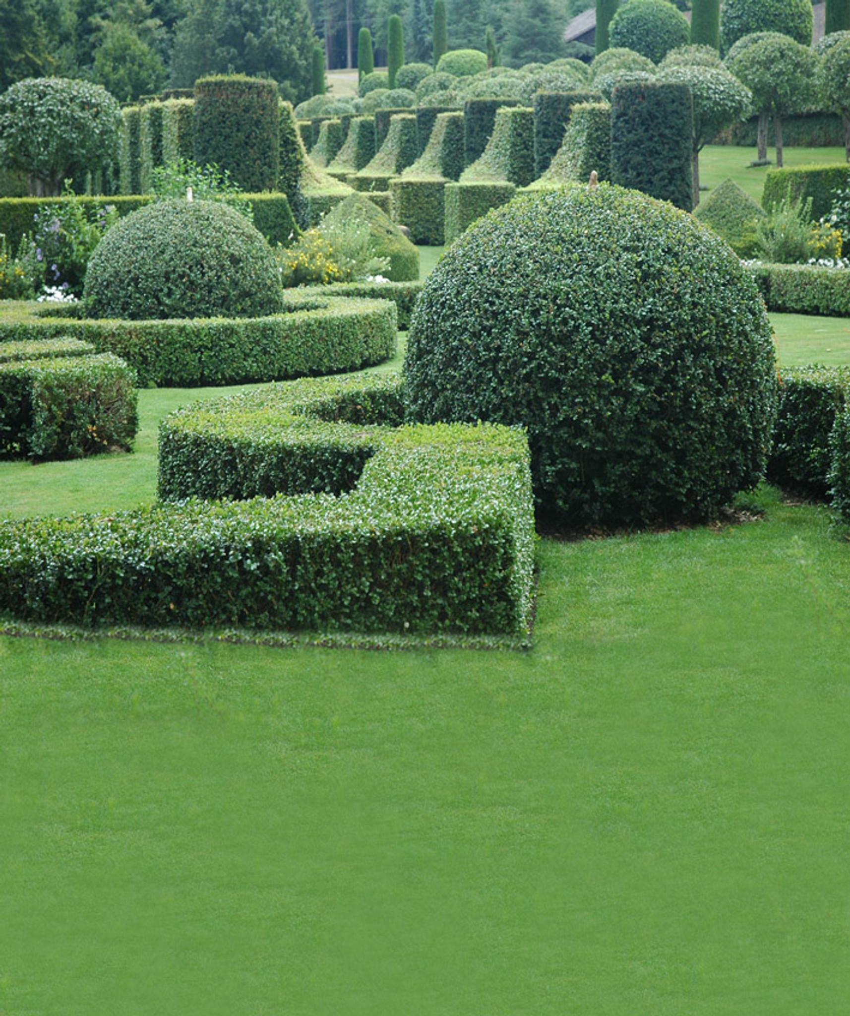 English Garden Backdrop