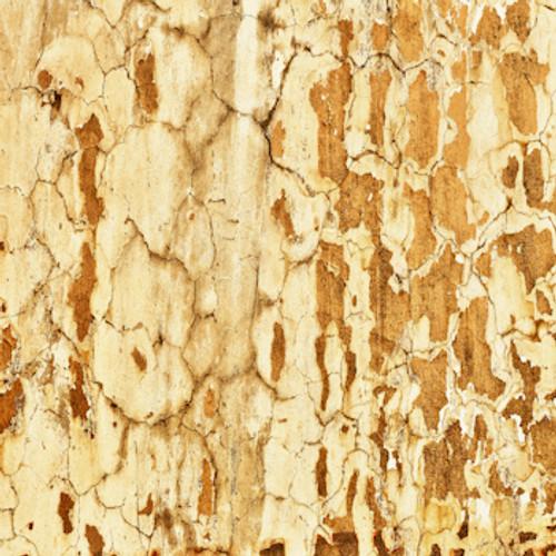 Cracked Sandy Grunge Floor